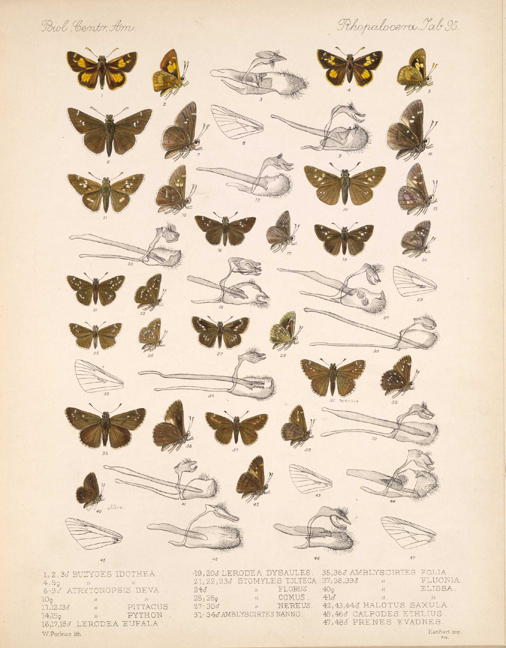 Butterflies and Moths,  Image number:bca_14_03_00_106