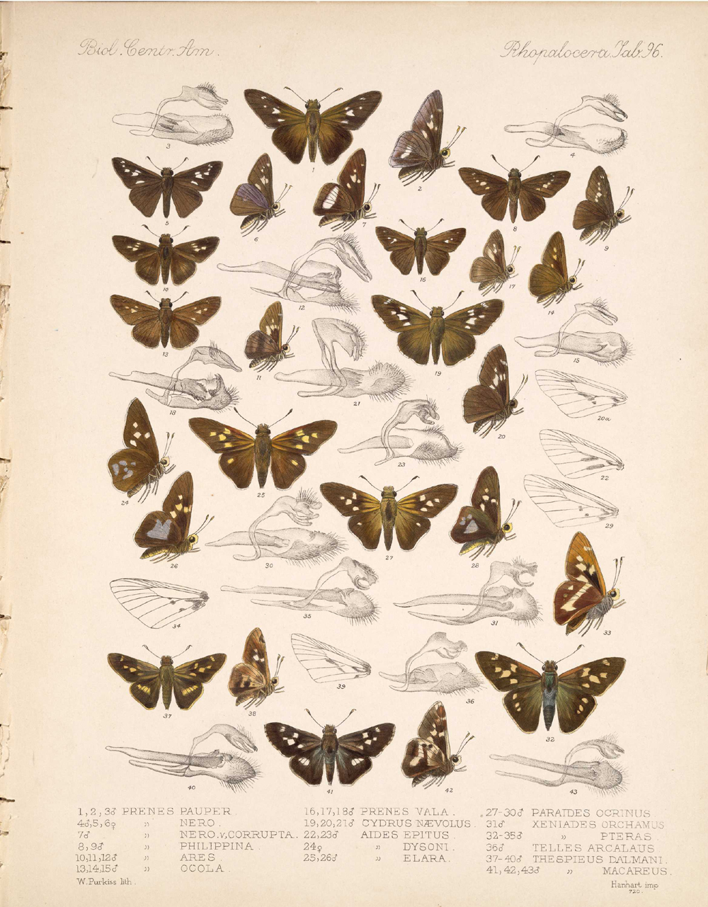 Butterflies and Moths,  Image number:bca_14_03_00_107