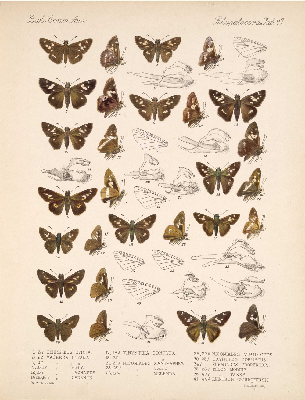 Butterflies and Moths,  Image number:bca_14_03_00_108