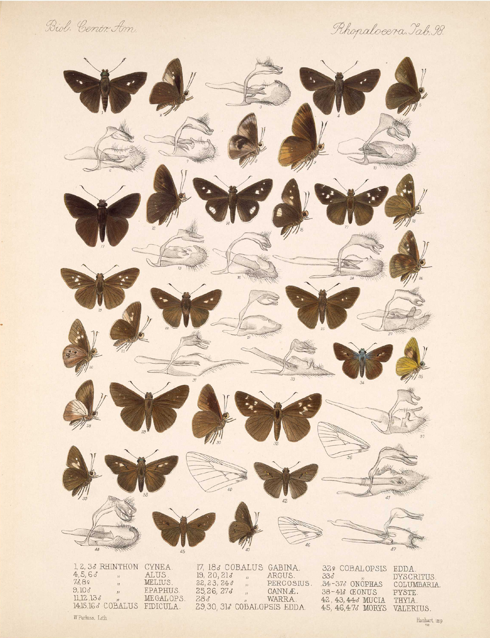 Butterflies and Moths,  Image number:bca_14_03_00_109