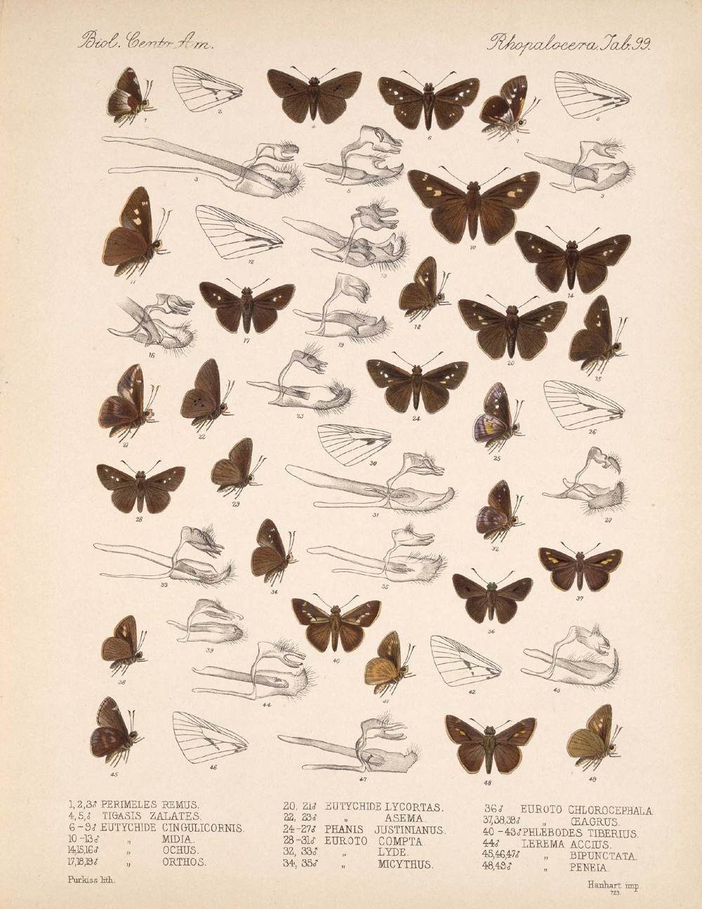 Butterflies and Moths,  Image number:bca_14_03_00_110