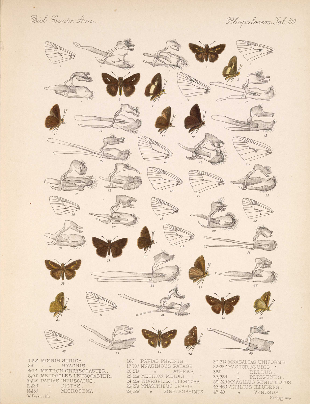 Butterflies and Moths,  Image number:bca_14_03_00_111