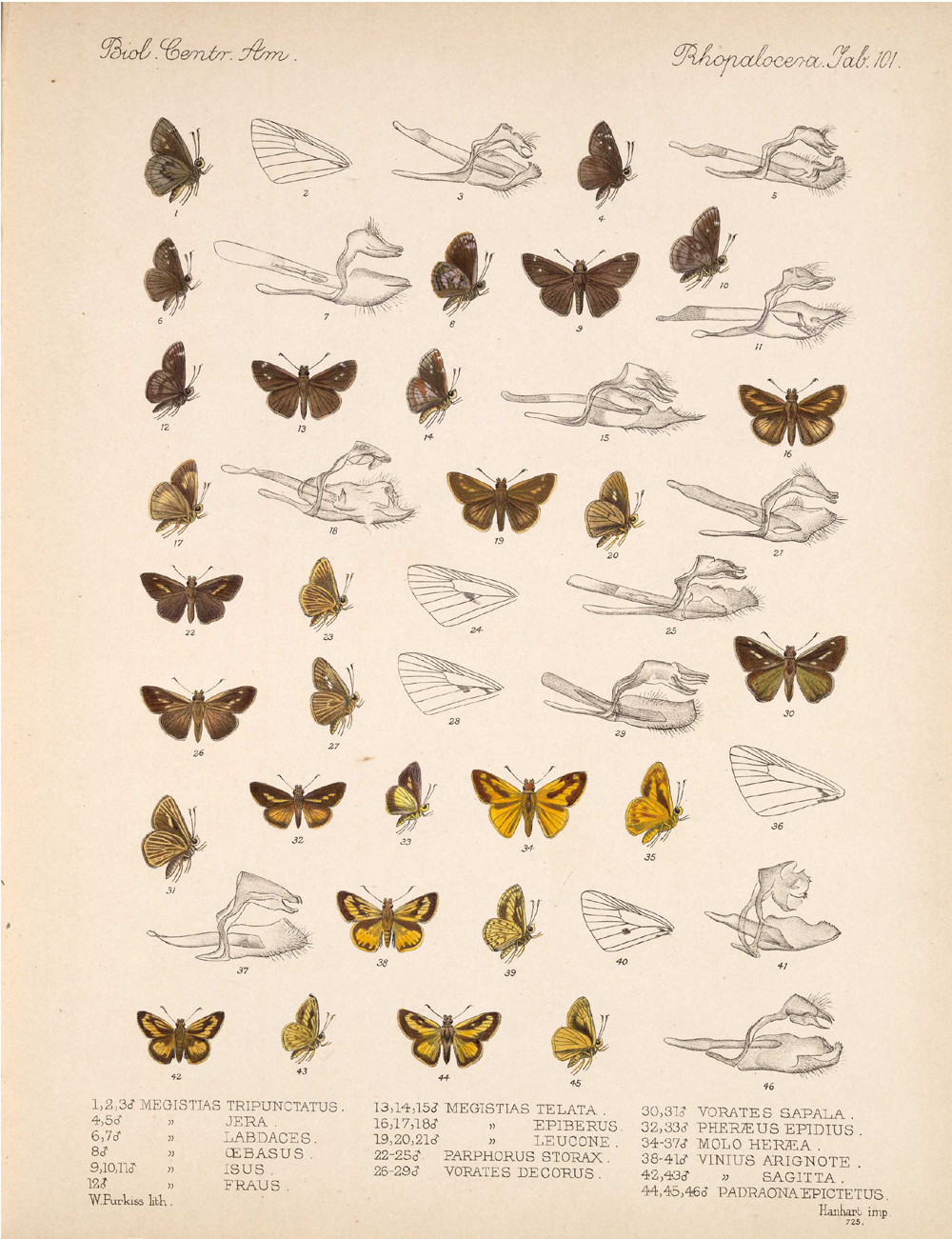 Butterflies and Moths,  Image number:bca_14_03_00_112