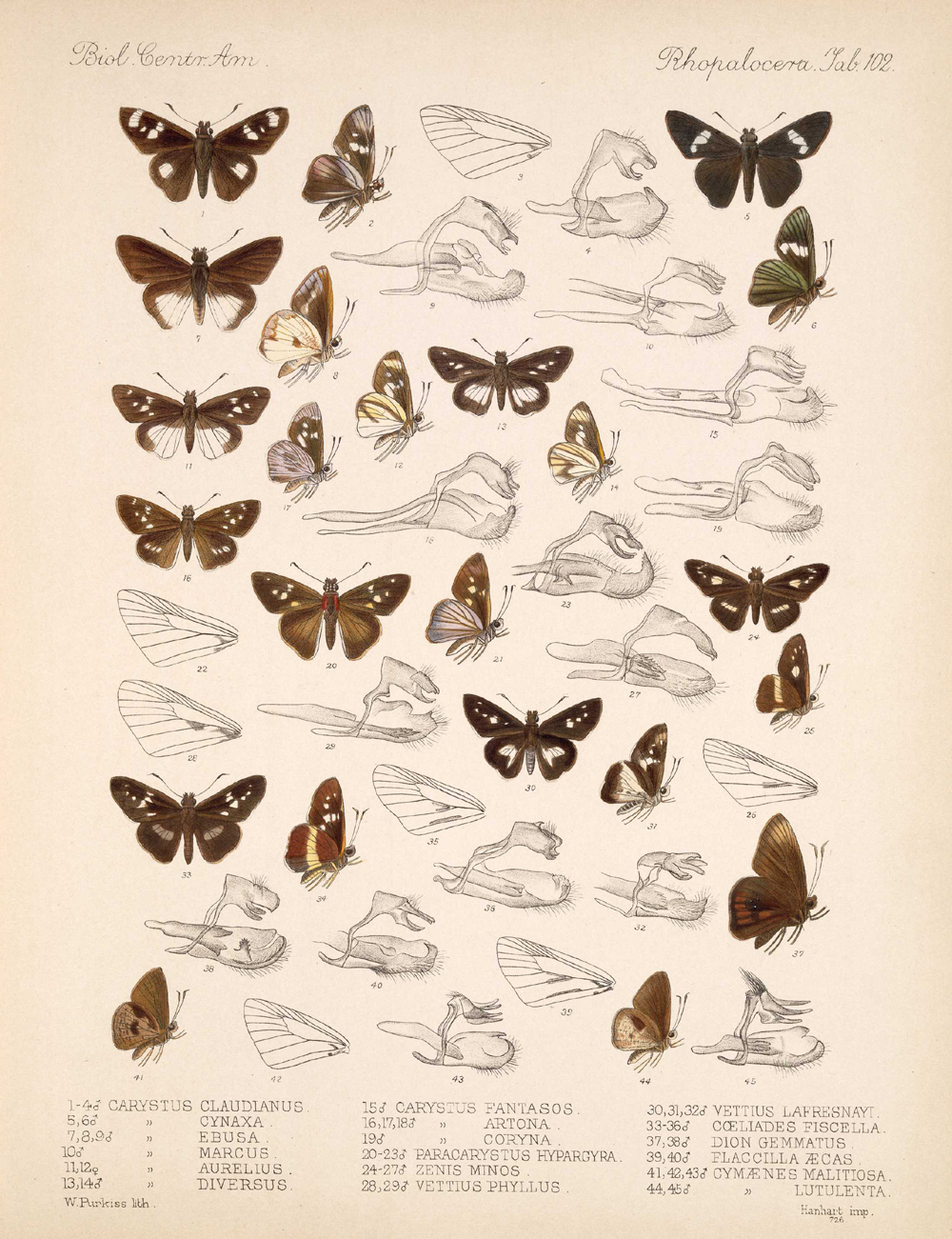 Butterflies and Moths,  Image number:bca_14_03_00_113