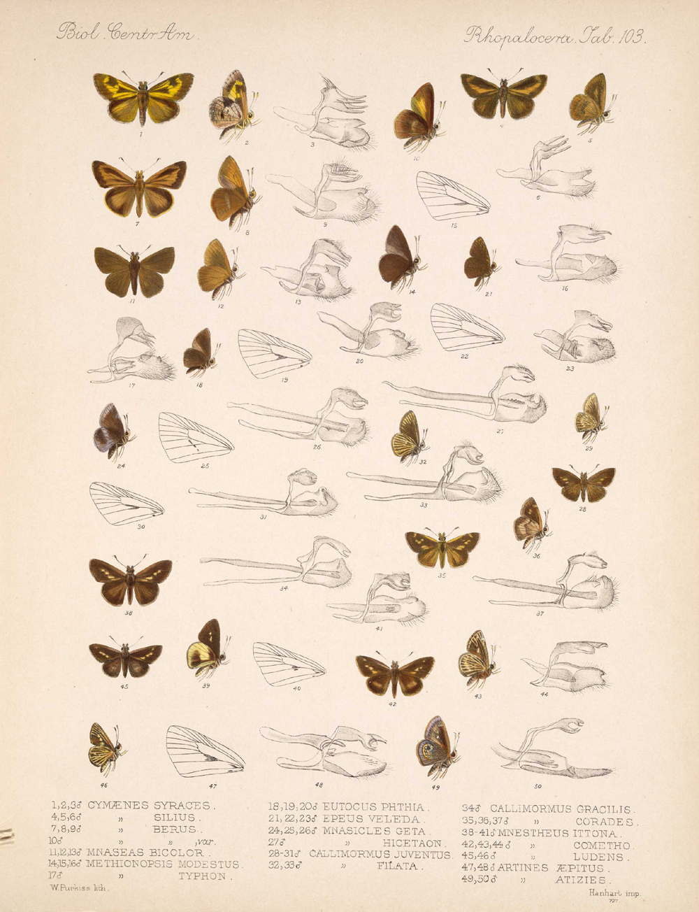 Butterflies and Moths,  Image number:bca_14_03_00_114