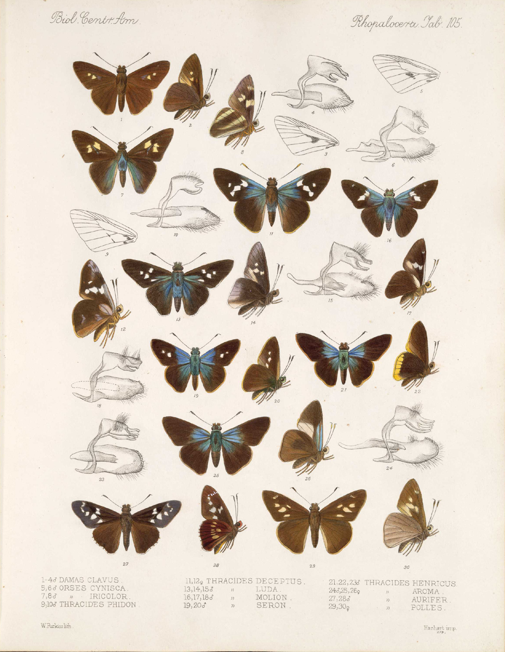 Butterflies and Moths,  Image number:bca_14_03_00_116