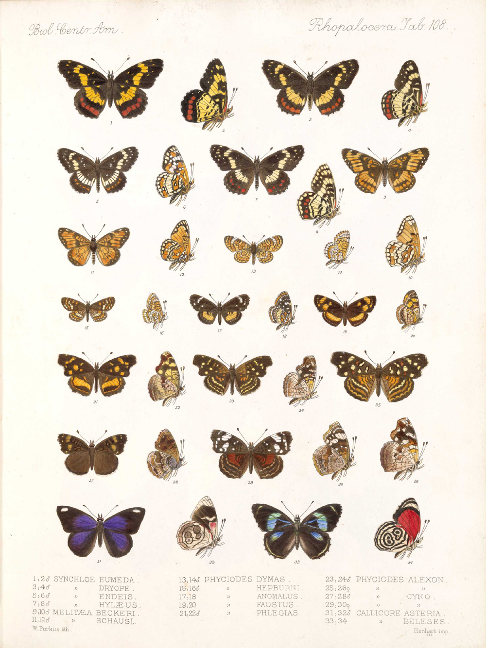 Butterflies and Moths,  Image number:bca_14_03_00_119