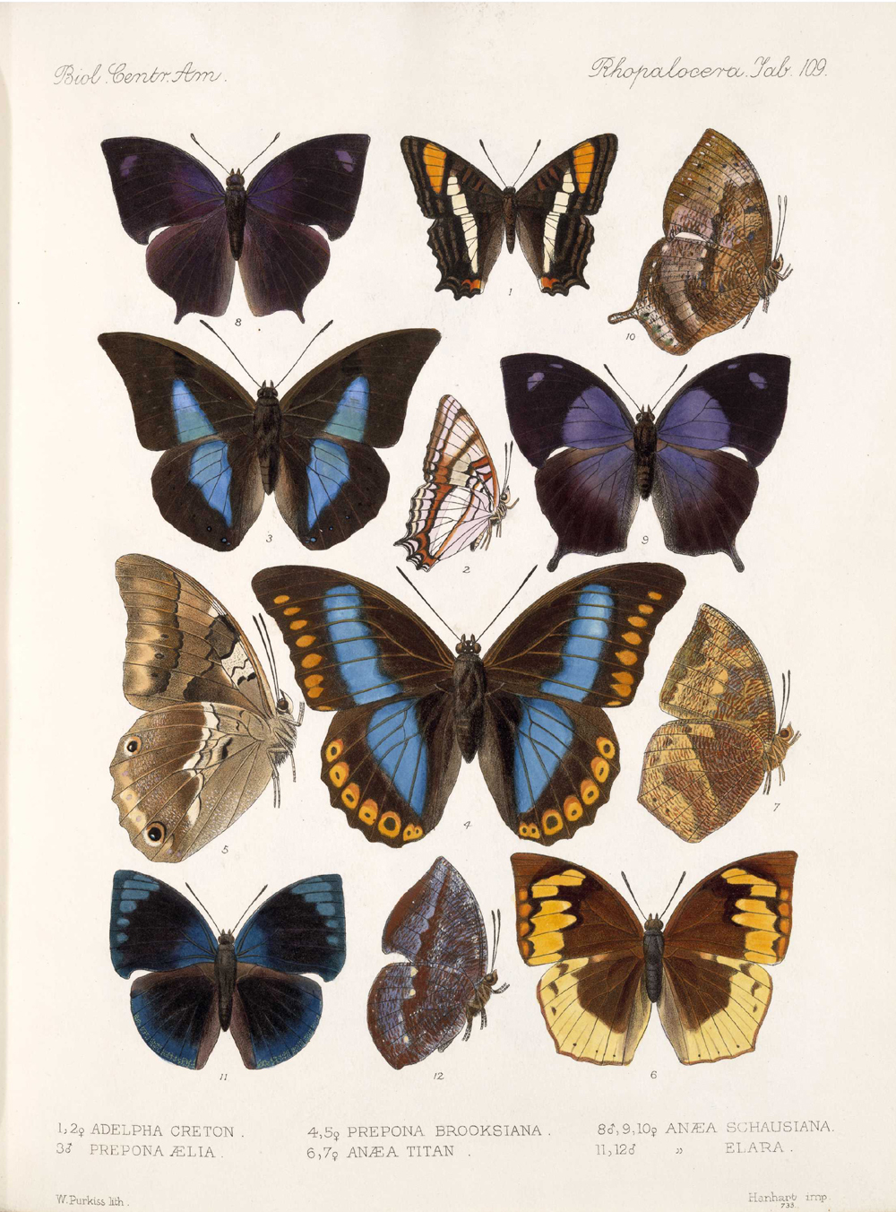 Butterflies and Moths,  Image number:bca_14_03_00_120