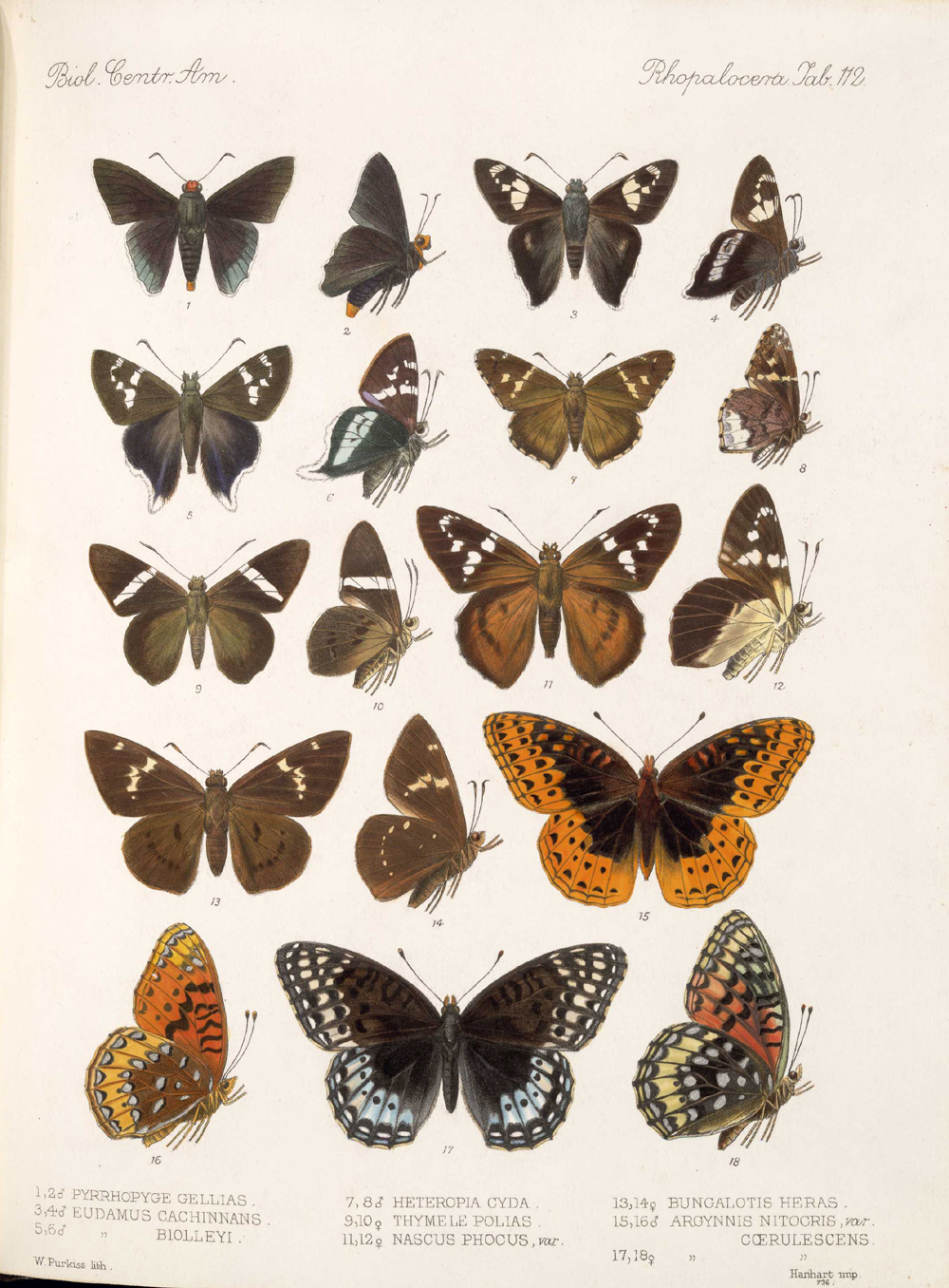Butterflies and Moths,  Image number:bca_14_03_00_123