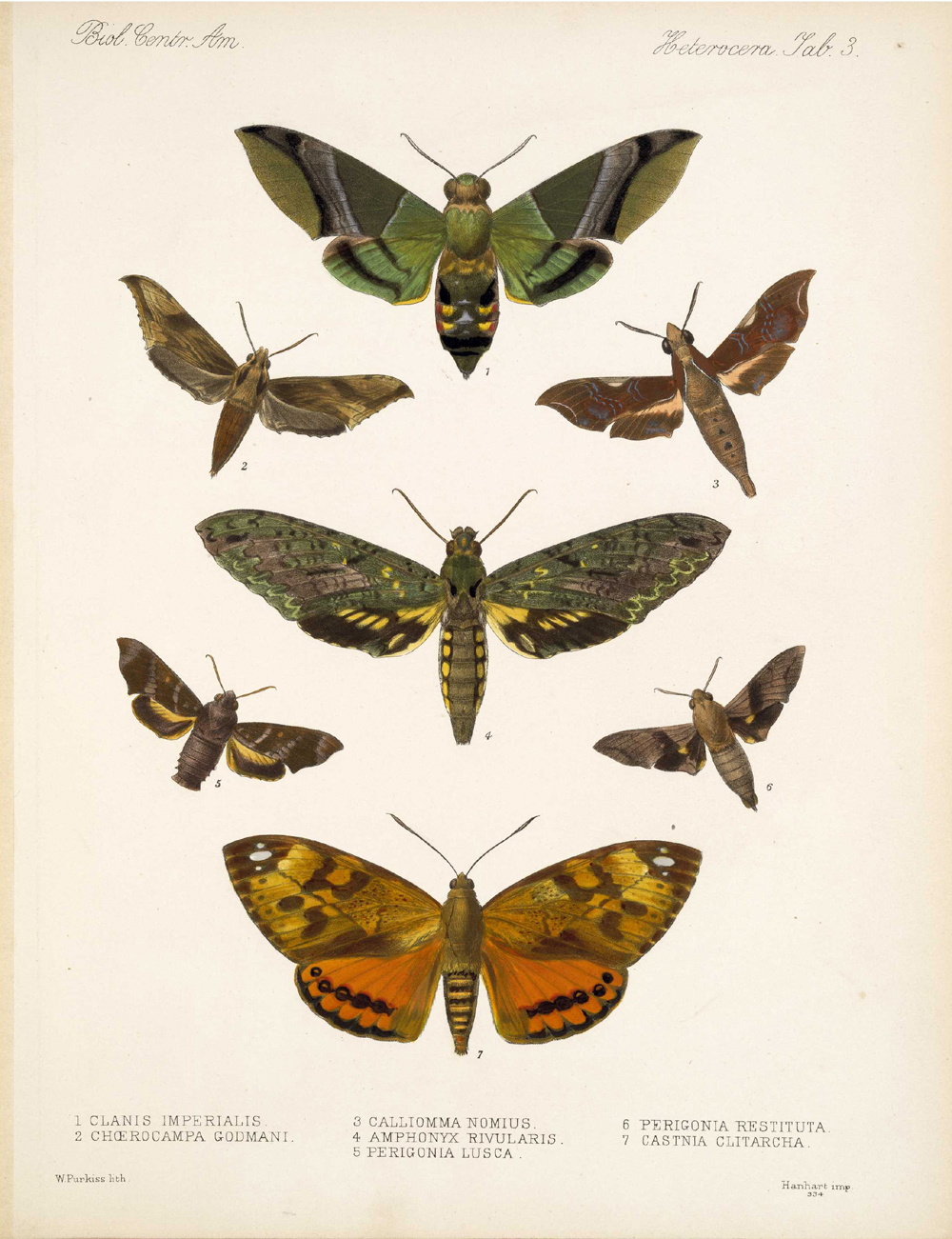 Butterflies and Moths,  Image number:bca_15_03_00_013