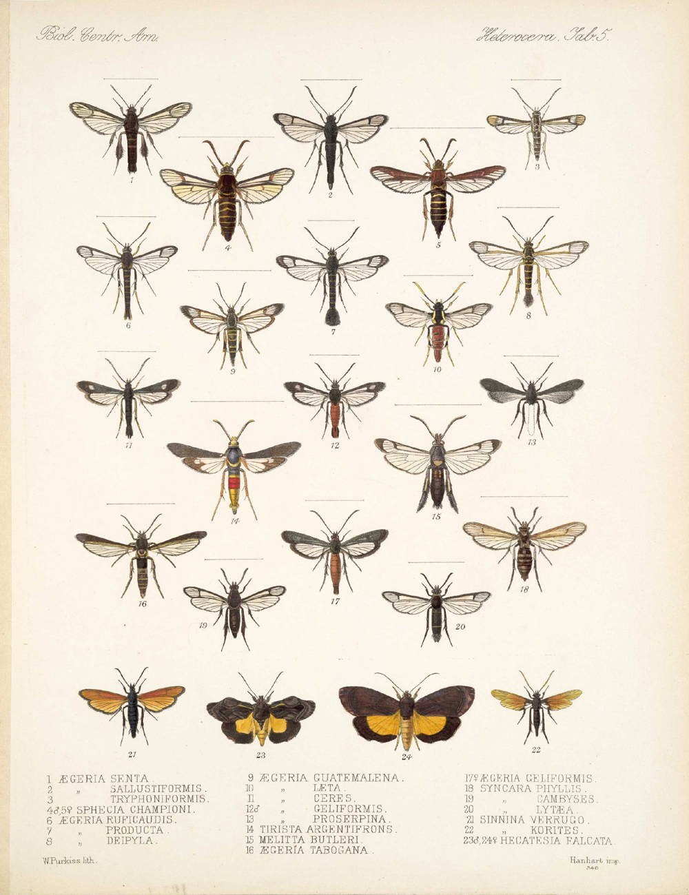Butterflies and Moths,  Image number:bca_15_03_00_015