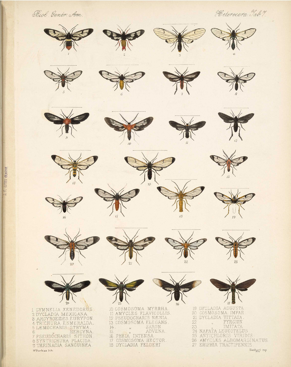 Butterflies and Moths,  Image number:bca_15_03_00_017