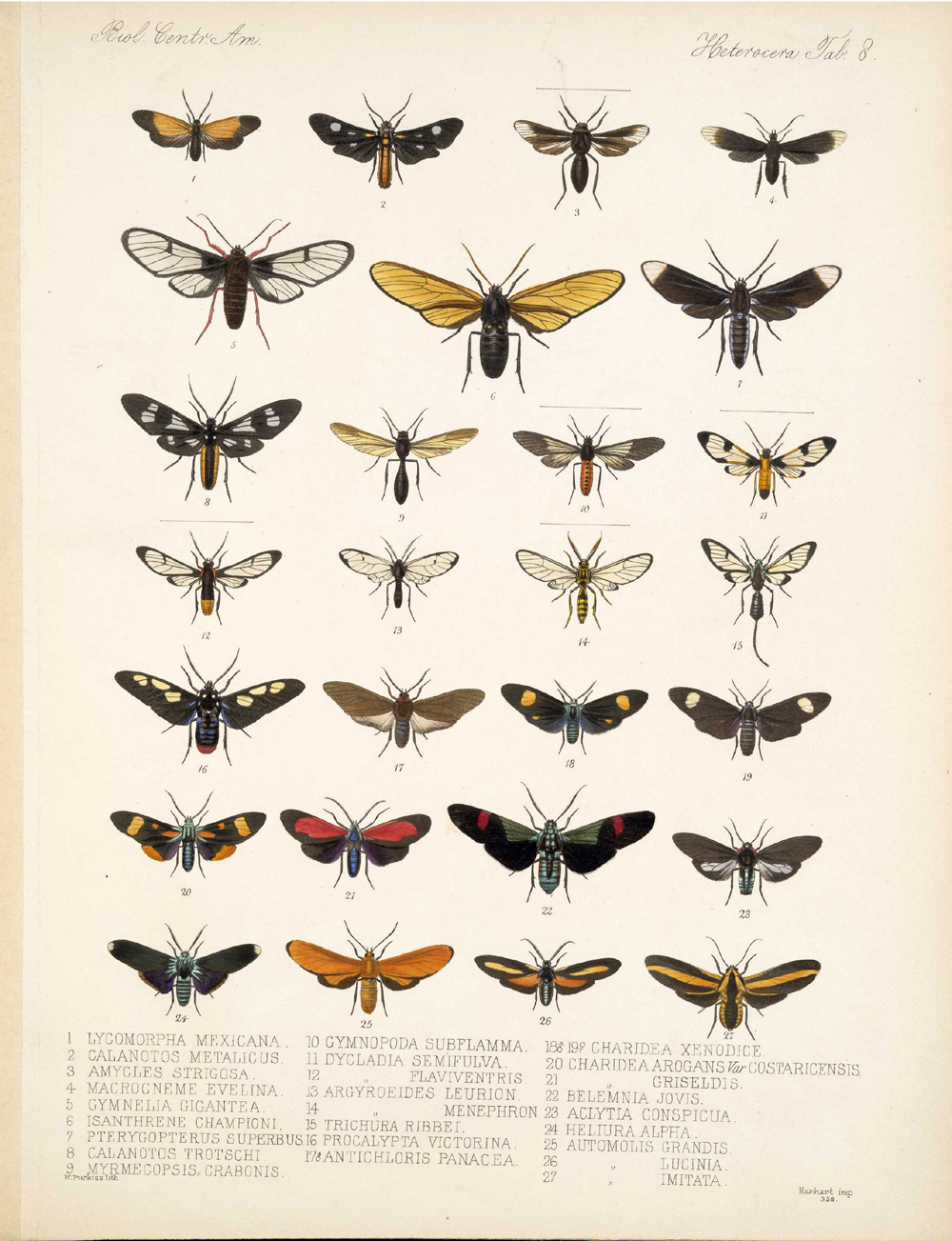 Butterflies and Moths,  Image number:bca_15_03_00_018