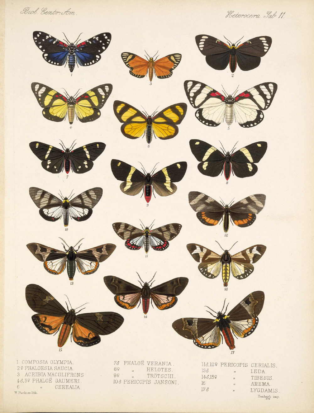Butterflies and Moths,  Image number:bca_15_03_00_021