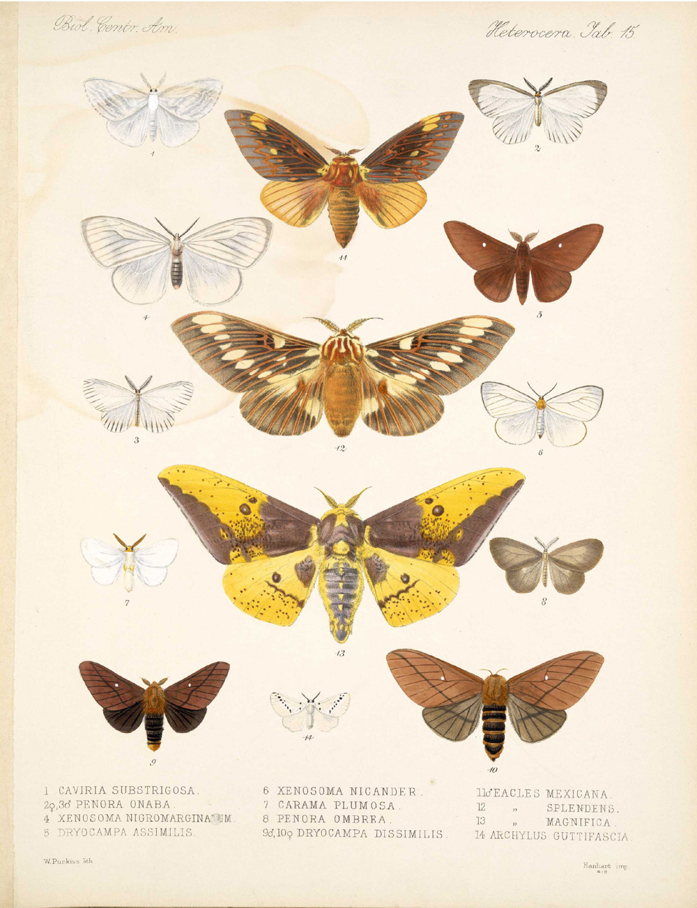 Butterflies and Moths,  Image number:bca_15_03_00_025