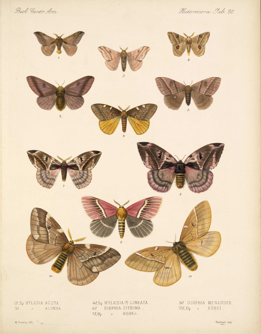 Butterflies and Moths,  Image number:bca_15_03_00_030