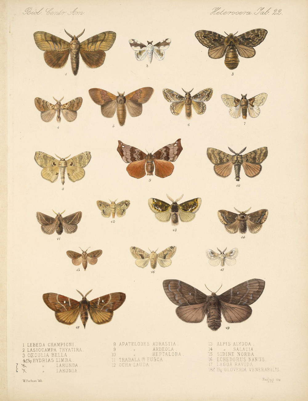 Butterflies and Moths,  Image number:bca_15_03_00_032