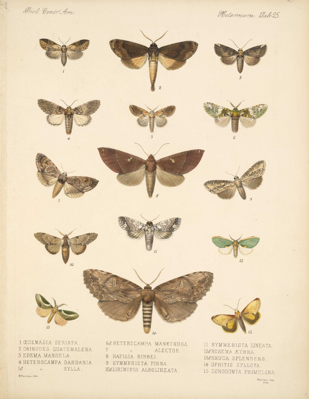 Butterflies and Moths,  Image number:bca_15_03_00_035