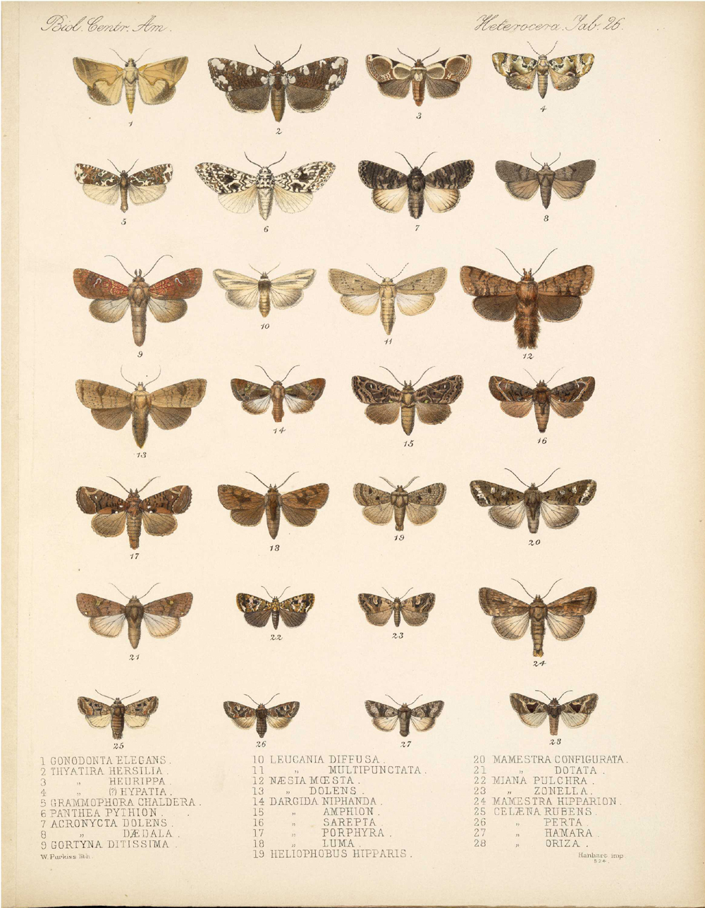 Butterflies and Moths,  Image number:bca_15_03_00_036