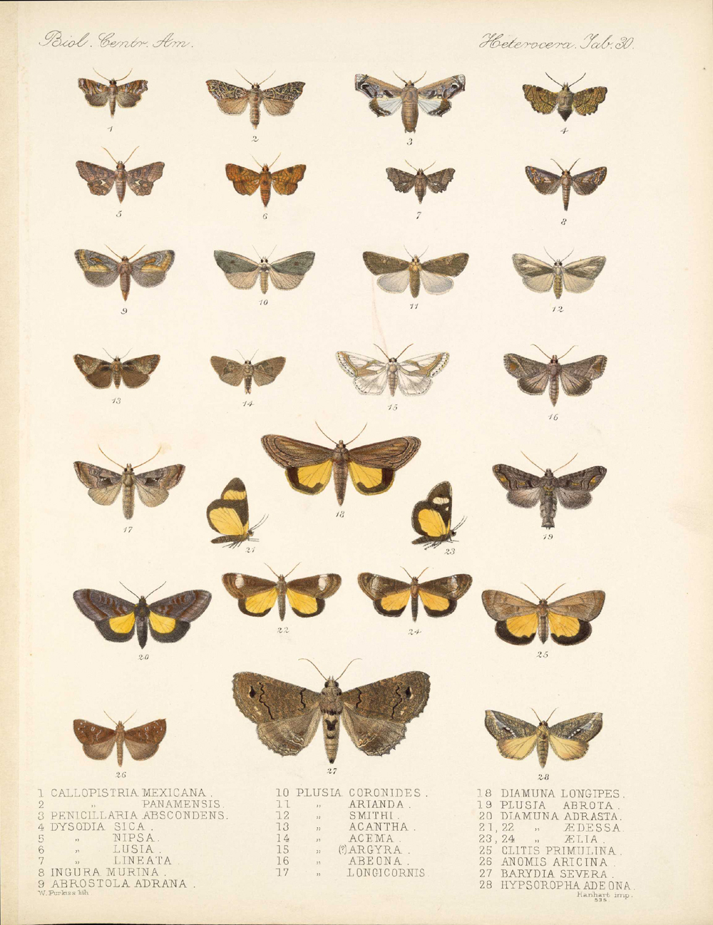 Butterflies and Moths,  Image number:bca_15_03_00_040
