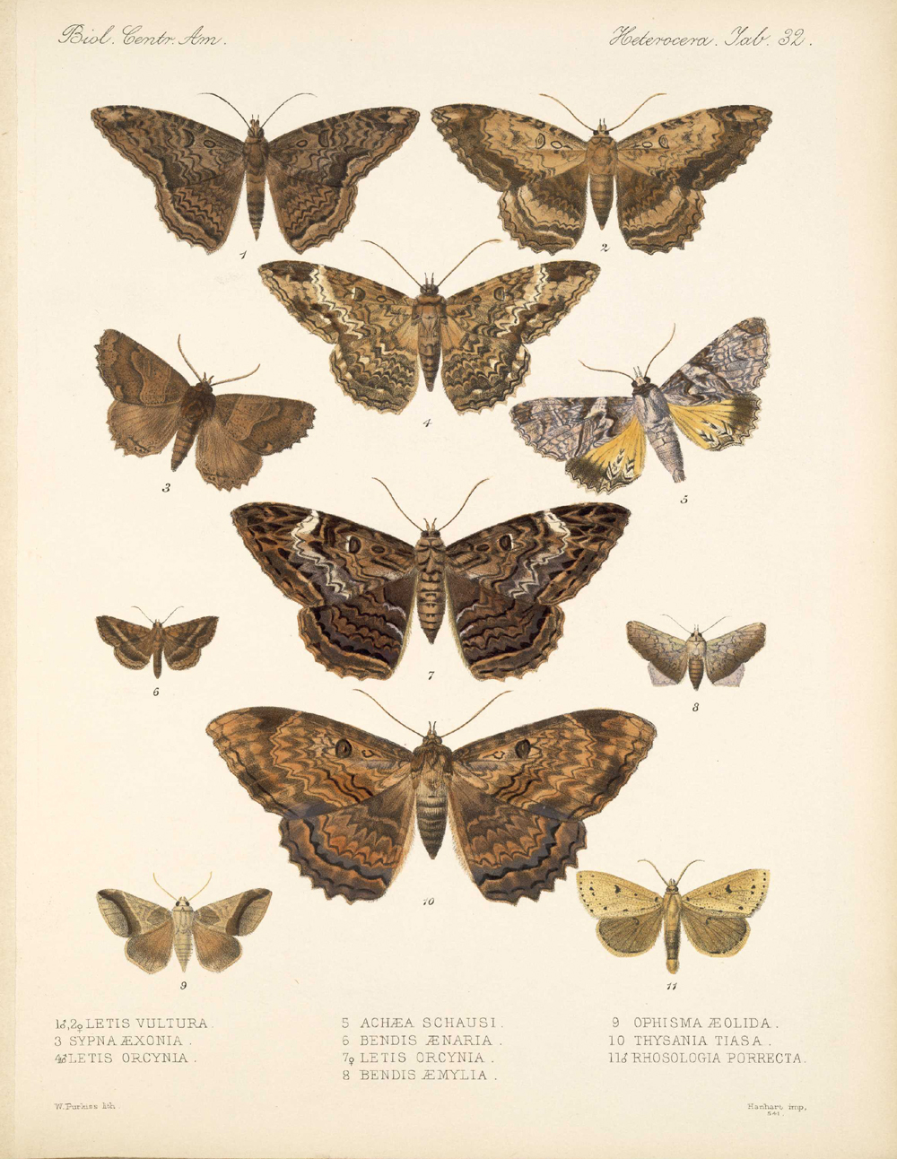 Butterflies and Moths,  Image number:bca_15_03_00_042