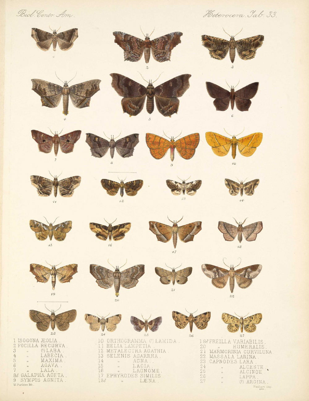 Butterflies and Moths,  Image number:bca_15_03_00_043