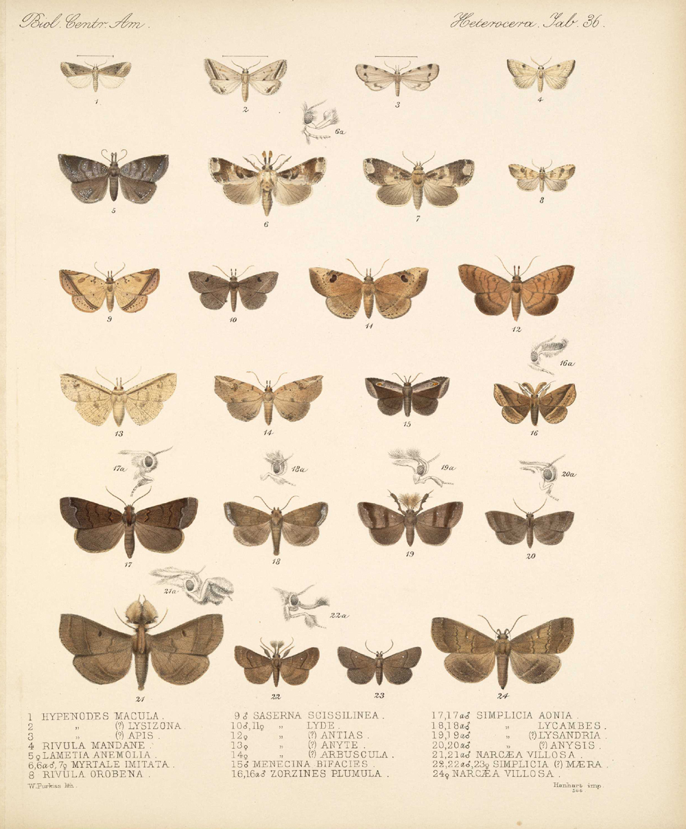 Butterflies and Moths,  Image number:bca_15_03_00_046