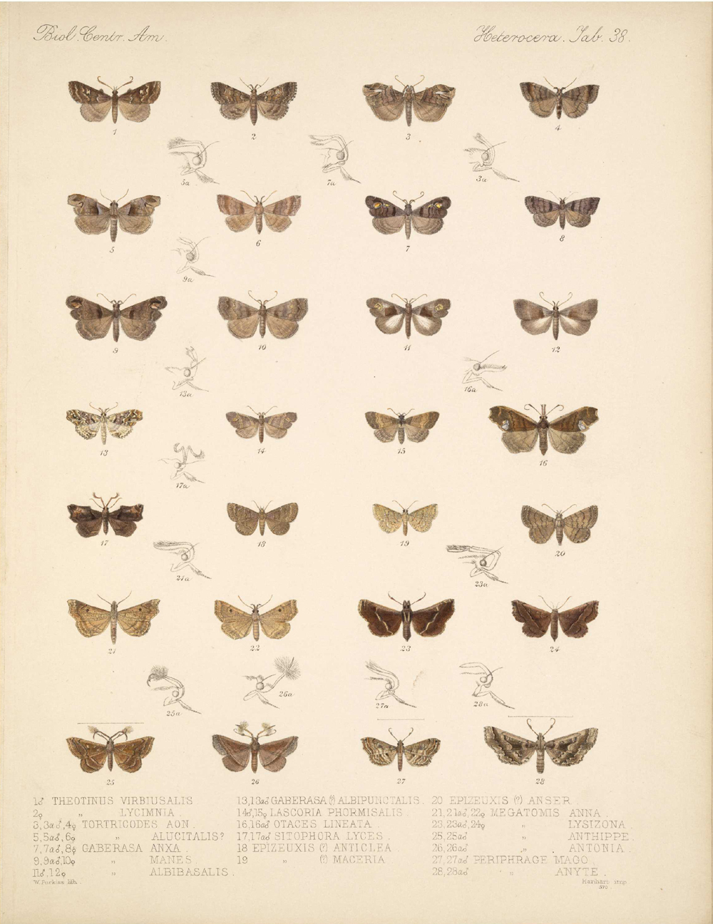 Butterflies and Moths,  Image number:bca_15_03_00_048