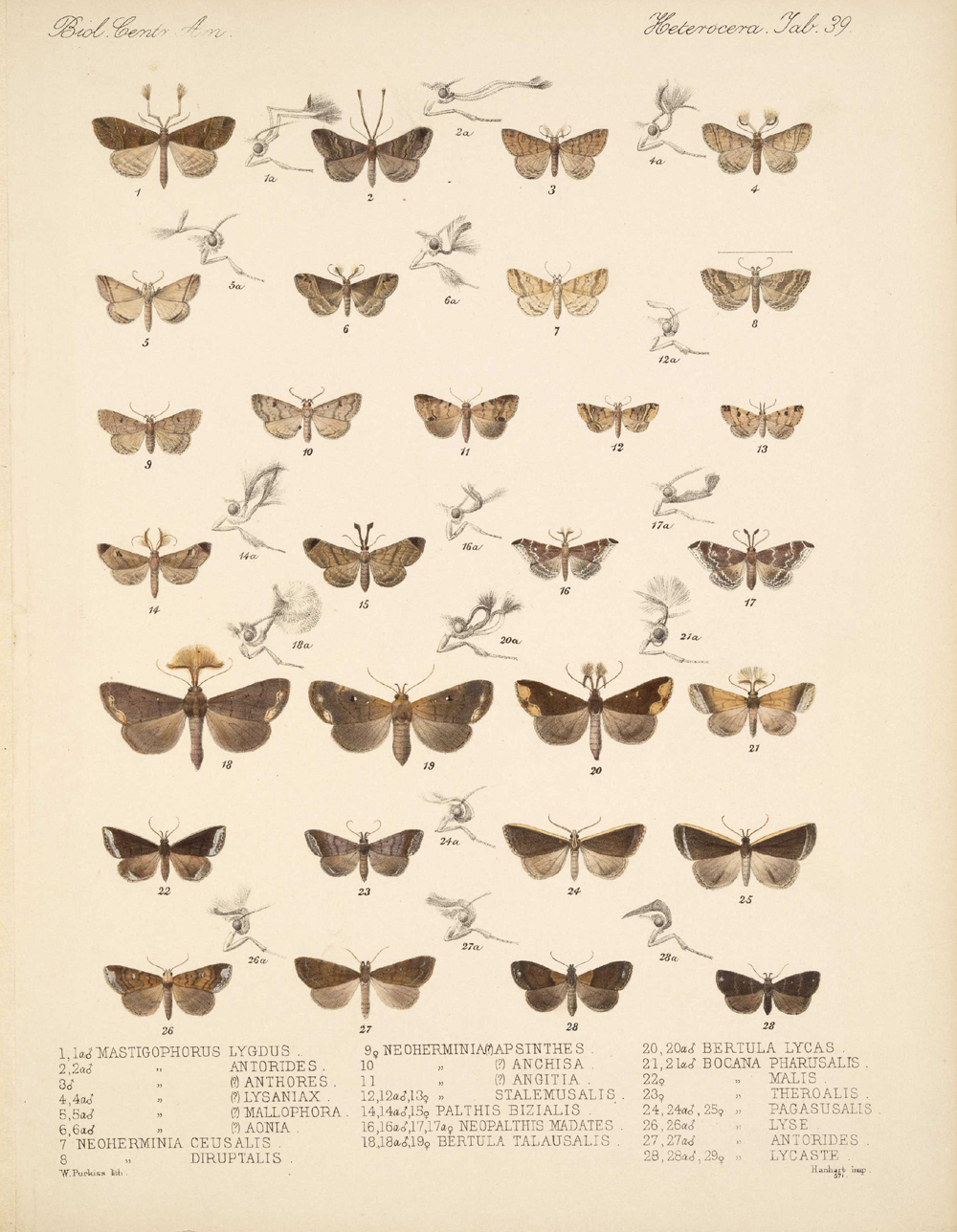 Butterflies and Moths,  Image number:bca_15_03_00_049
