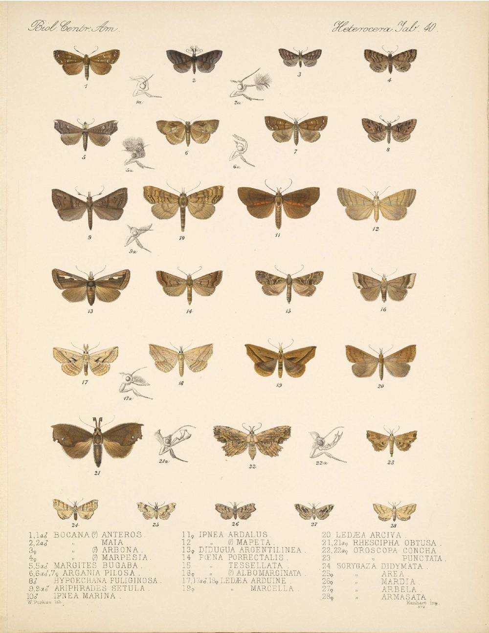 Butterflies and Moths,  Image number:bca_15_03_00_050