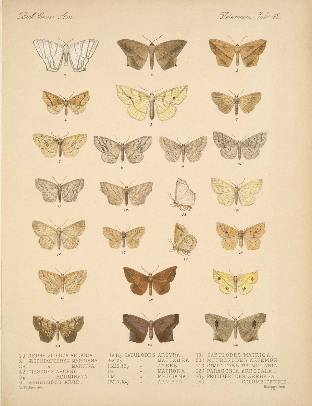 Butterflies and Moths,  Image number:bca_15_03_00_052