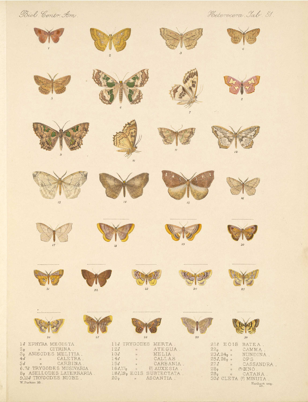 Butterflies and Moths,  Image number:bca_15_03_00_061