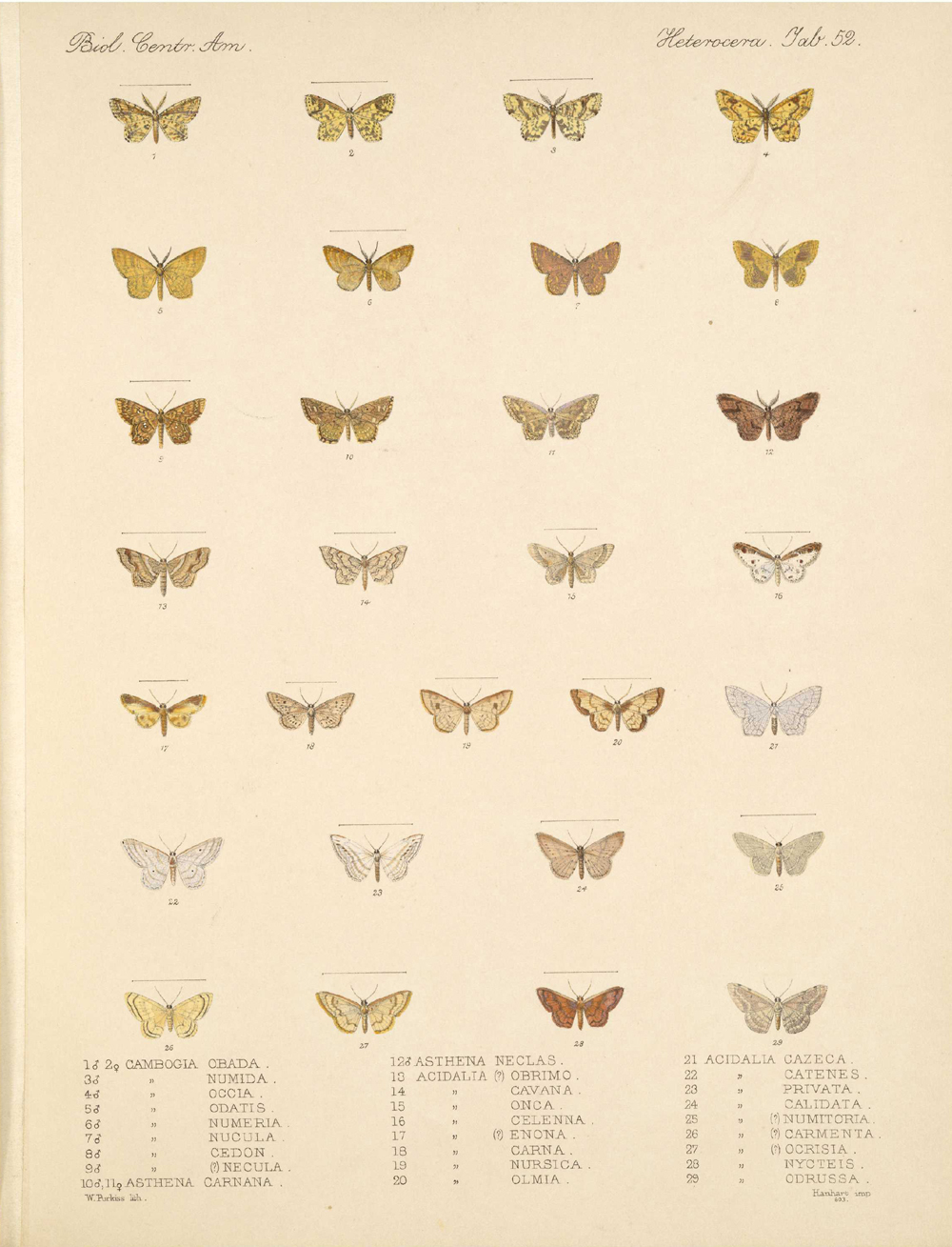 Butterflies and Moths,  Image number:bca_15_03_00_062