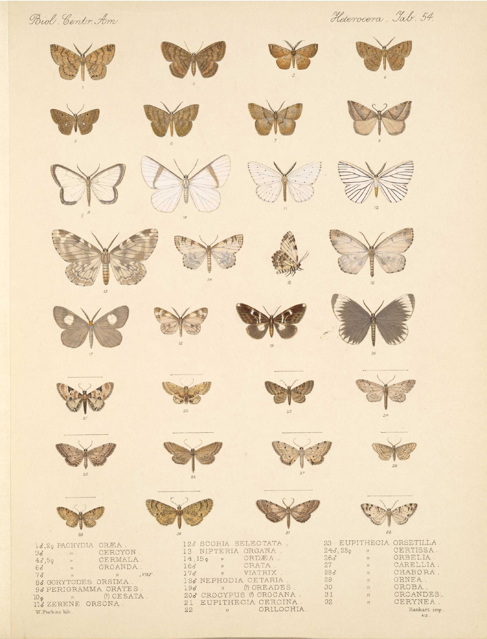 Butterflies and Moths,  Image number:bca_15_03_00_064