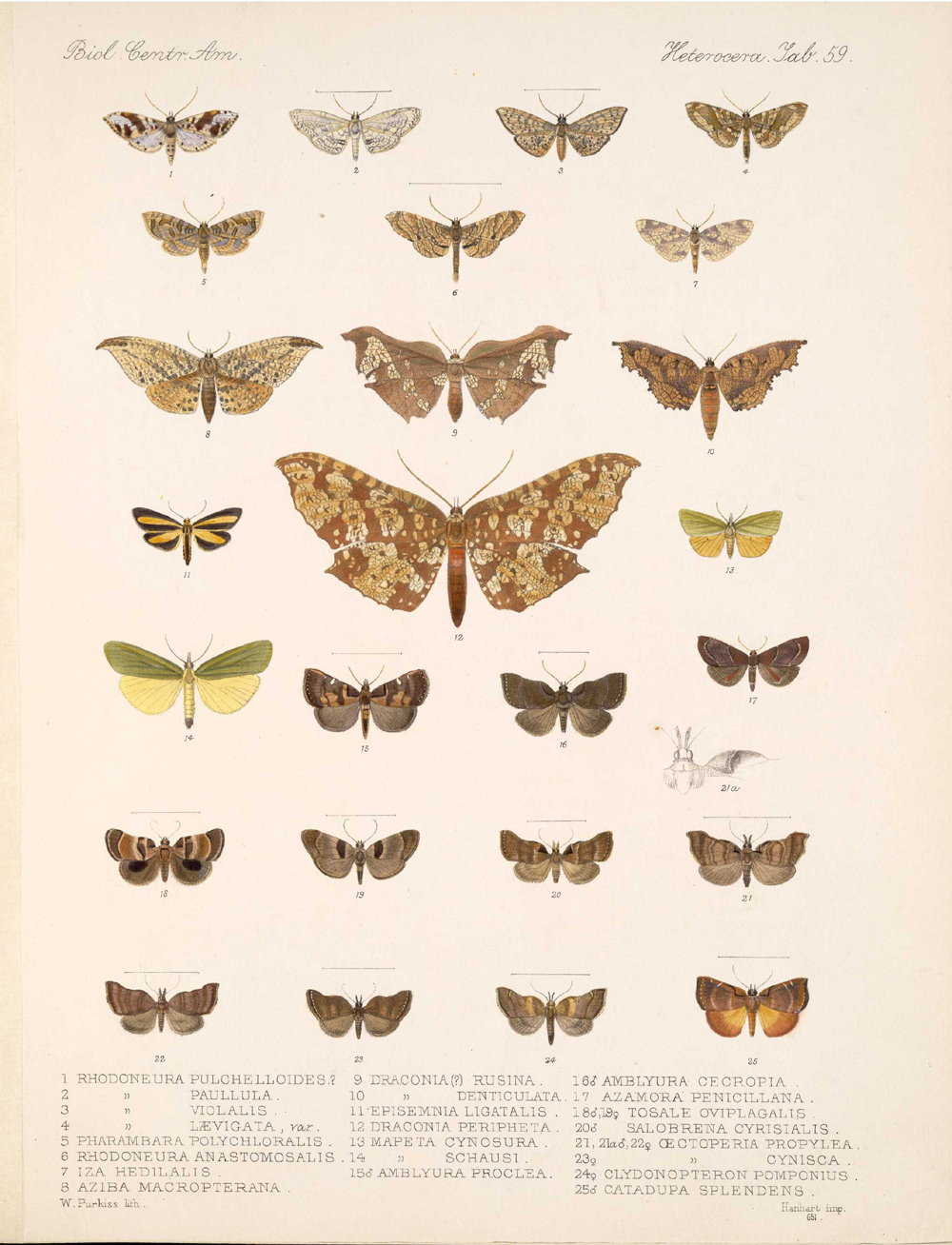 Butterflies and Moths,  Image number:bca_15_03_00_069