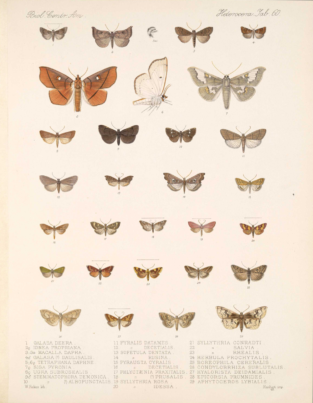Butterflies and Moths,  Image number:bca_15_03_00_070