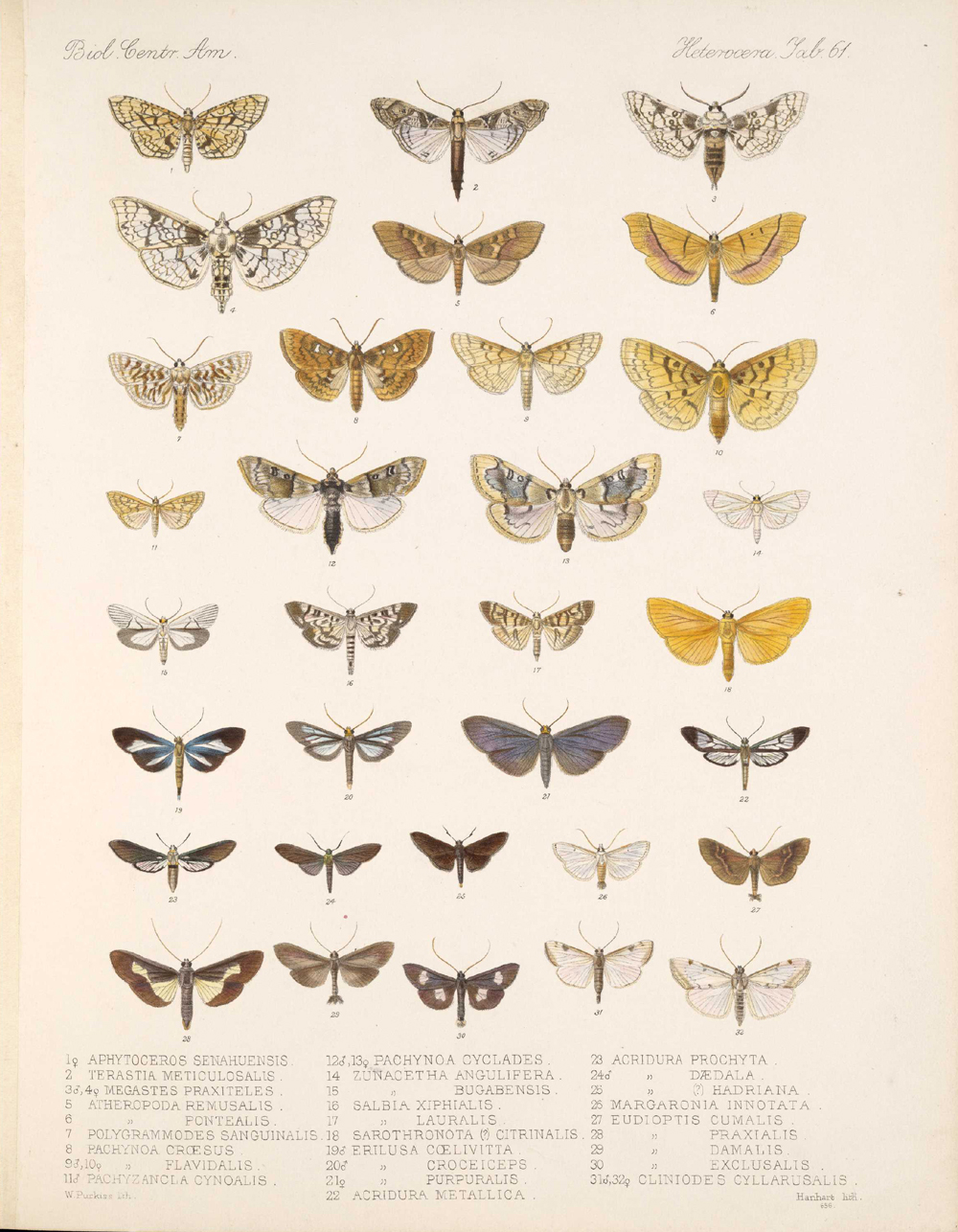 Butterflies and Moths,  Image number:bca_15_03_00_071