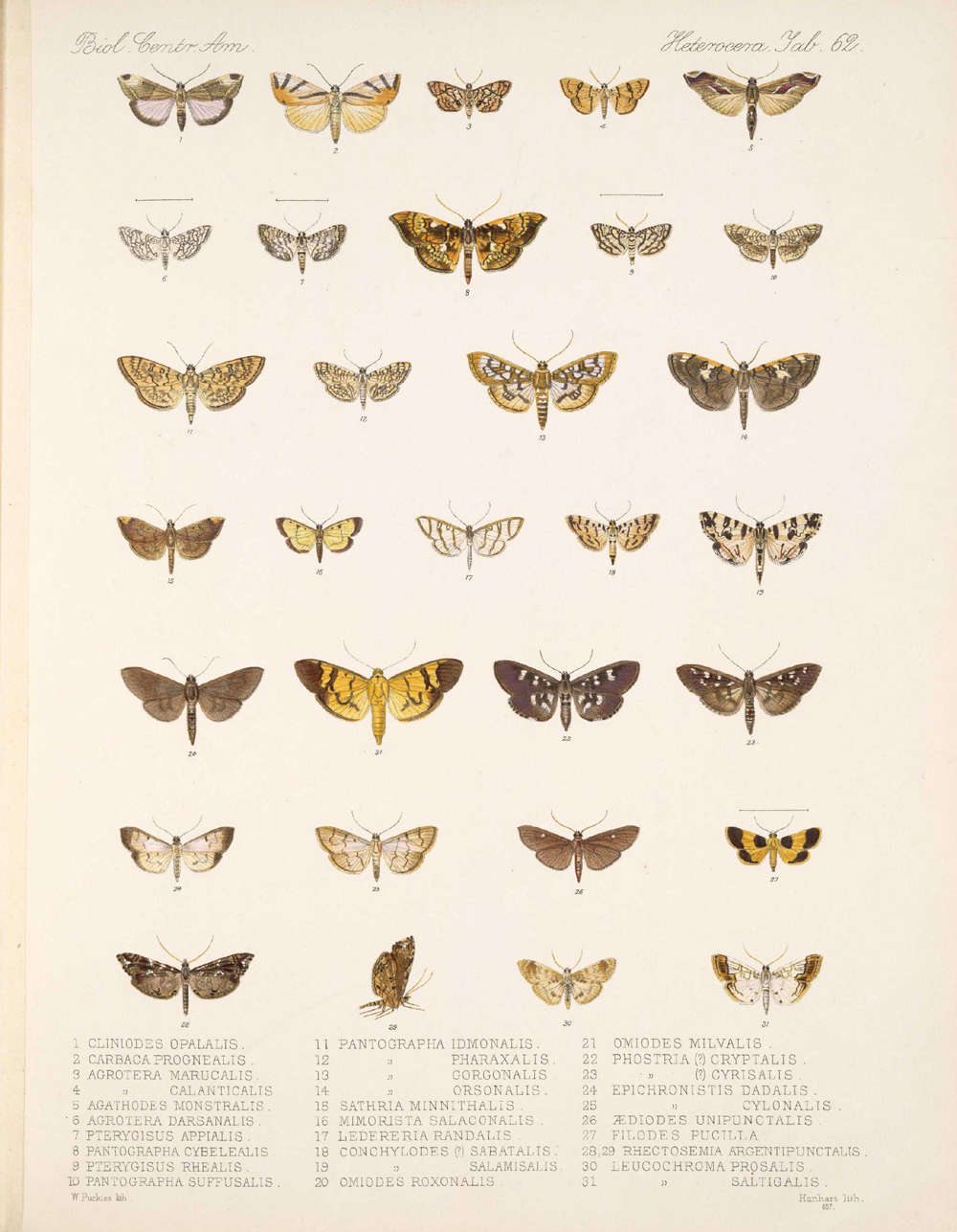 Butterflies and Moths,  Image number:bca_15_03_00_072
