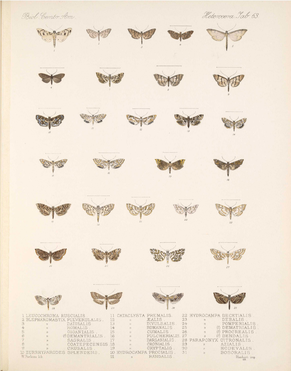 Butterflies and Moths,  Image number:bca_15_03_00_073