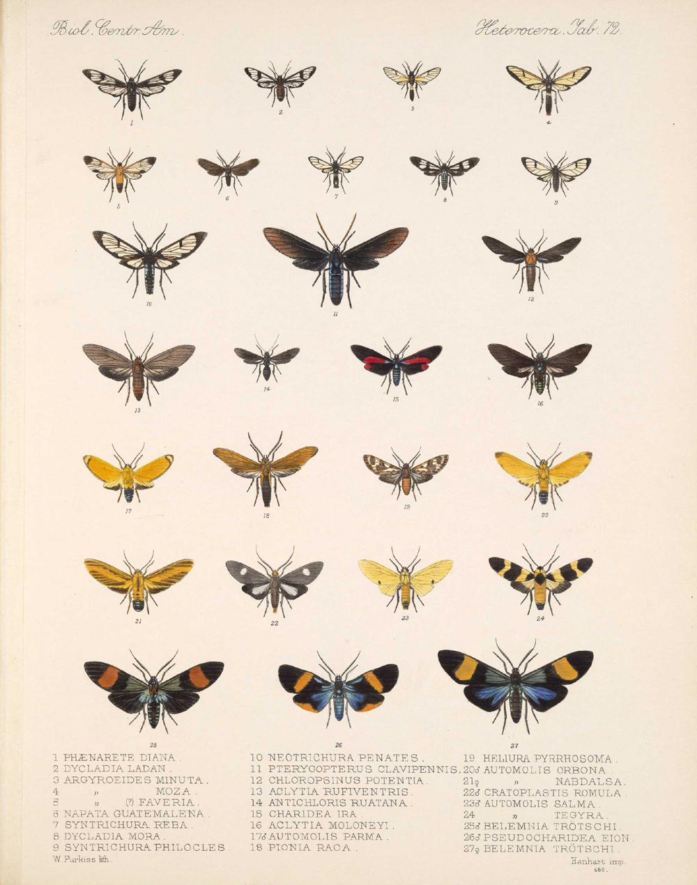 Butterflies and Moths,  Image number:bca_15_03_00_082