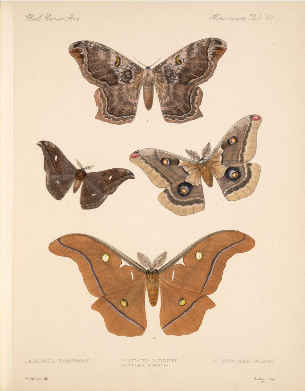 Butterflies and Moths,  Image number:bca_15_03_00_093