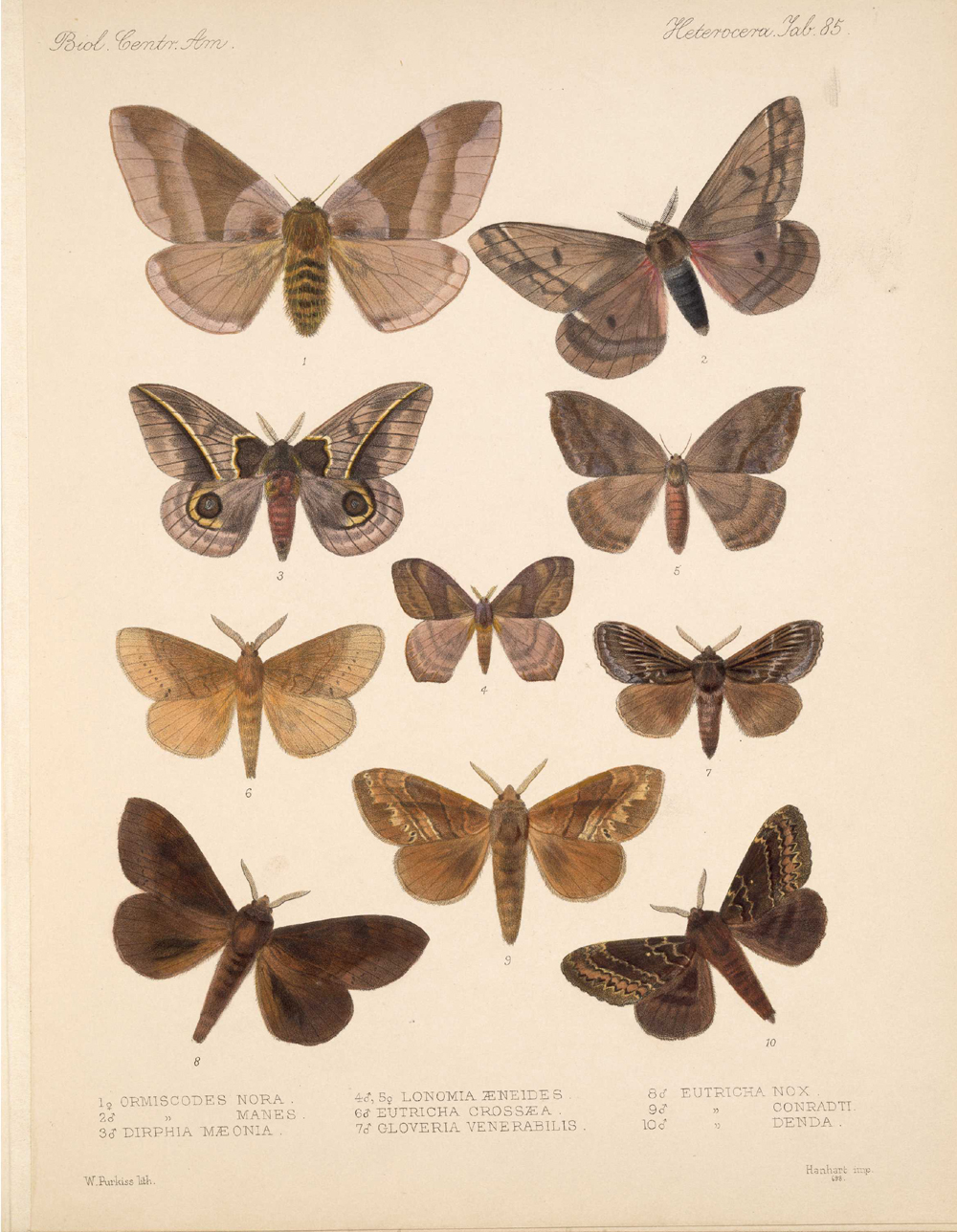 Butterflies and Moths,  Image number:bca_15_03_00_095