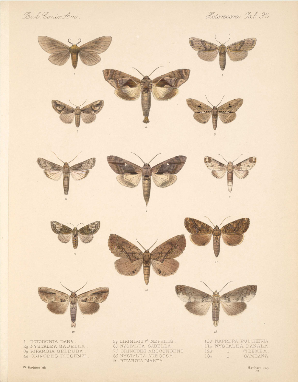 Butterflies and Moths,  Image number:bca_15_03_00_102