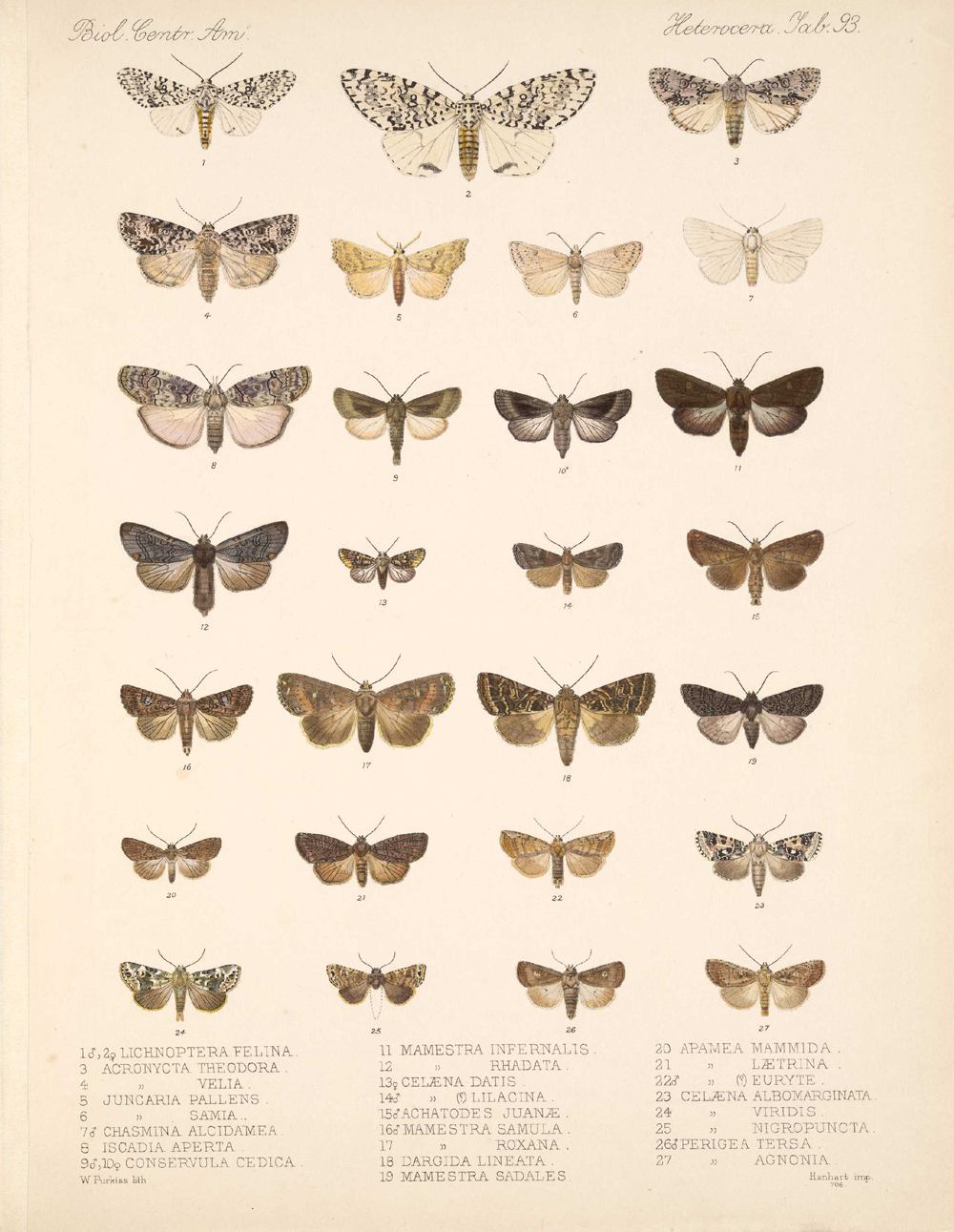 Butterflies and Moths,  Image number:bca_15_03_00_103