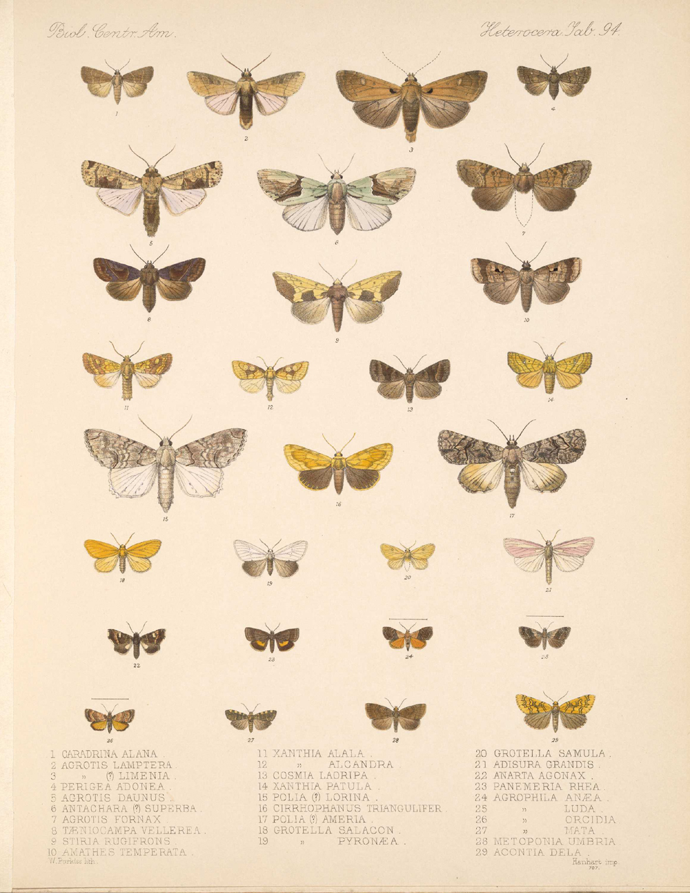 Butterflies and Moths,  Image number:bca_15_03_00_104