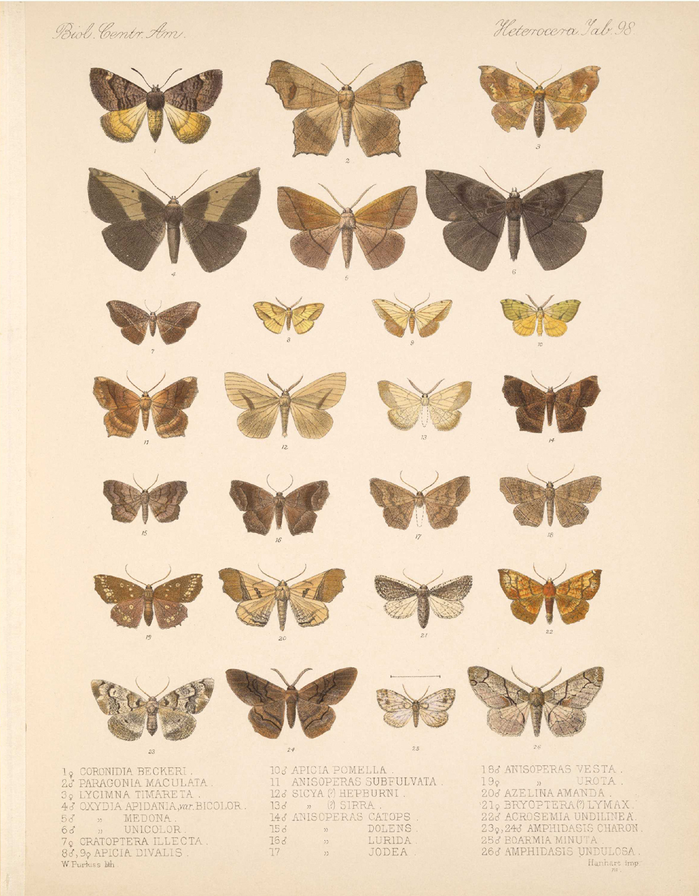 Butterflies and Moths,  Image number:bca_15_03_00_108