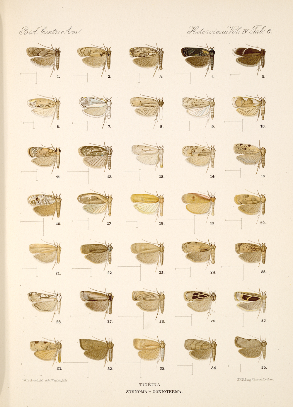Butterflies and Moths,  Image number:bca_15_04_00_273