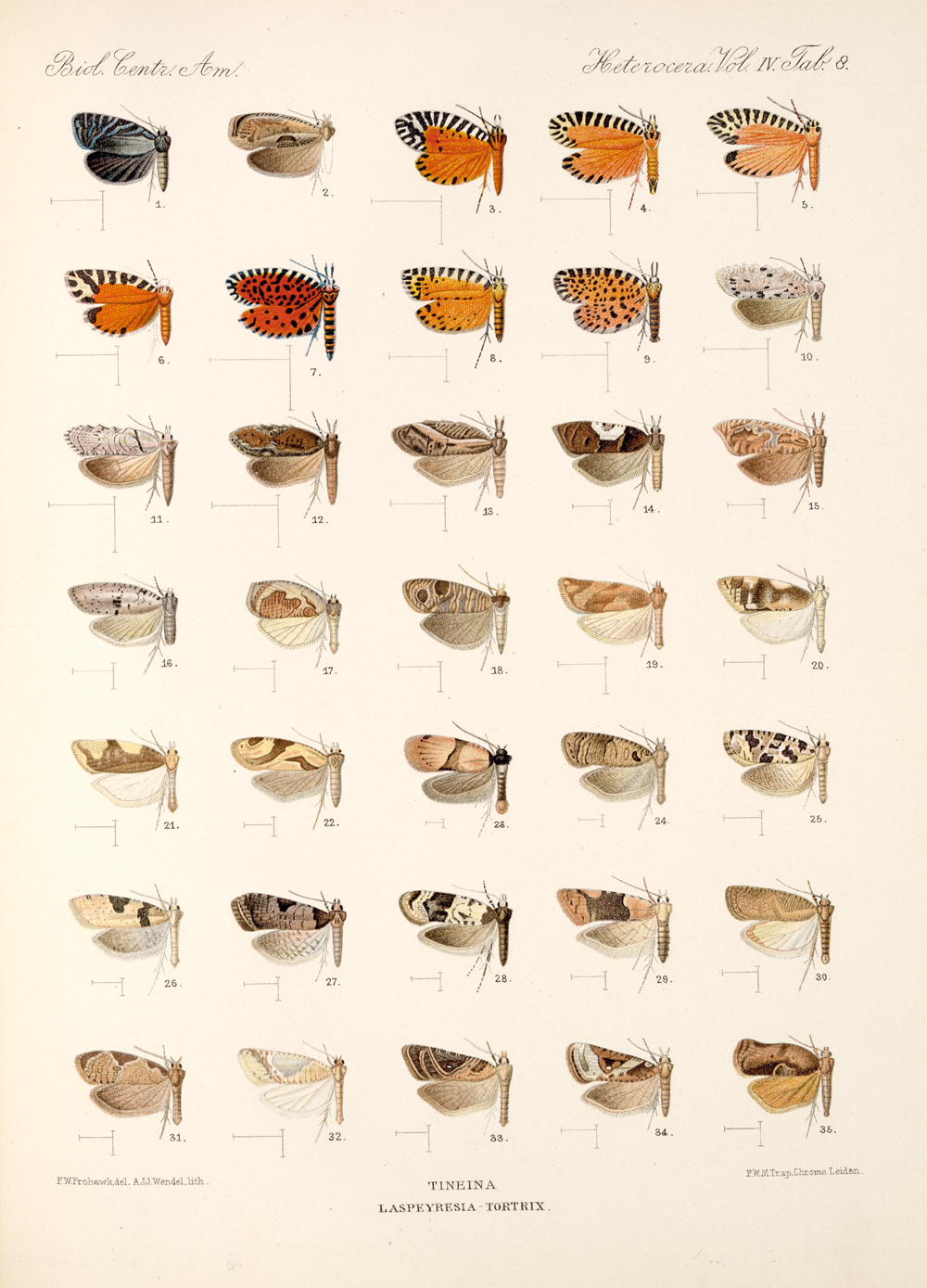 Butterflies and Moths,  Image number:bca_15_04_00_459