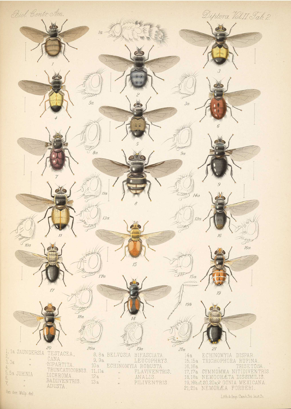 Other Insects,  Image number:bca_16_02_00_515