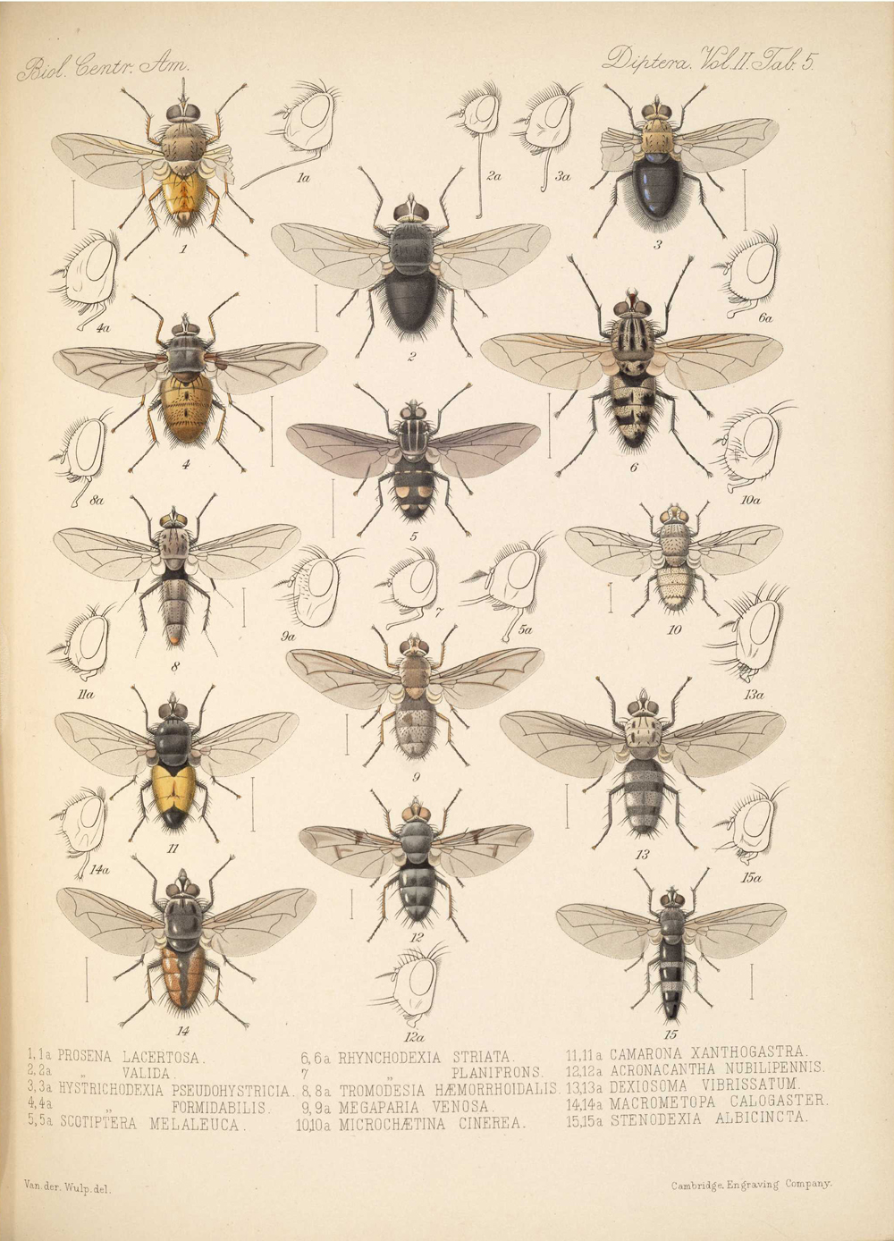 Other Insects,  Image number:bca_16_02_00_521